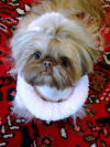 http://cocktailshihtzu.com/wp-content/themes/humble/timthumb.php?q=100&w=650&h=350&src=http://cocktailshihtzu.com/wp-content/uploads/2011/11/IMG_06453.jpg